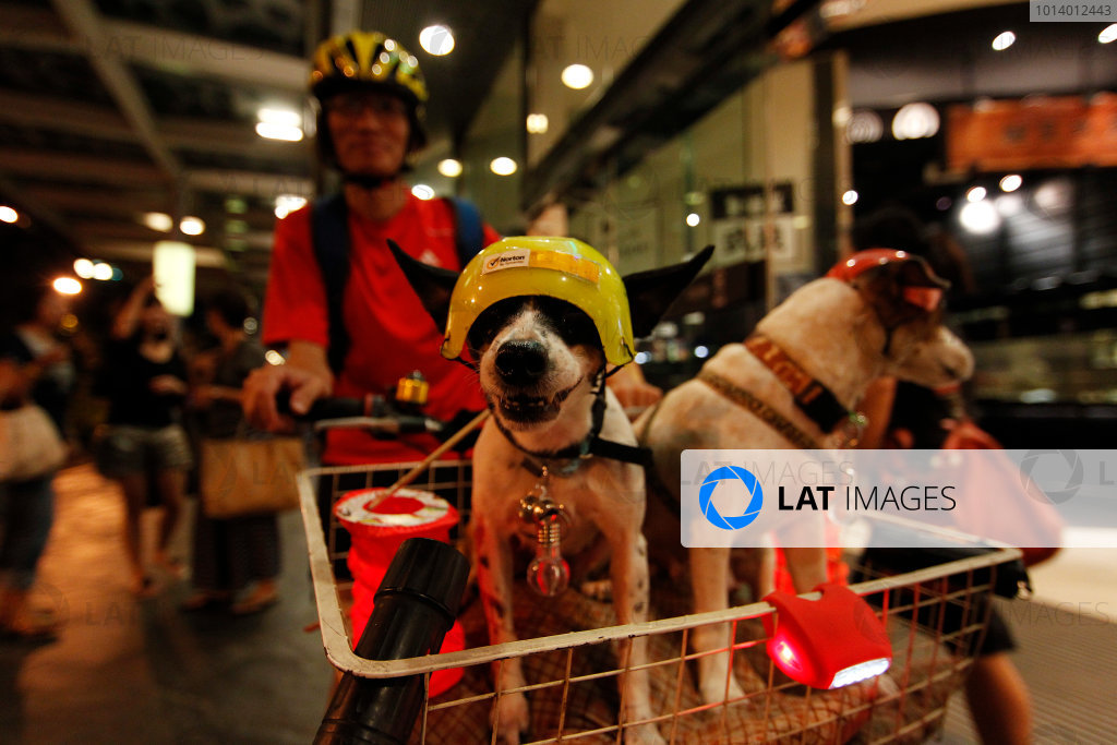 Marina Bay Circuit, Singapore. 18th September 2013. A dog gets ready to race in Singapore. World Copyright: Jed Leicester/LAT Photographic. ref: Digital Image _JEL9255