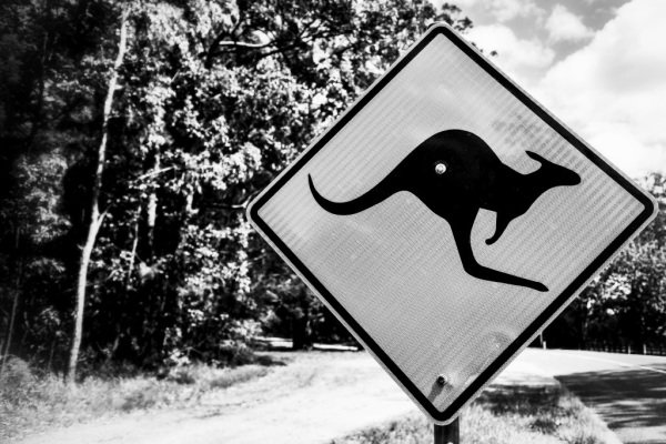 Kangaroo warning sign at World Rally Championship, Rd13, Rally Australia, Preparations and Shakedown, Coffs Harbour, New South Wales, Australia, 16 November 2017.